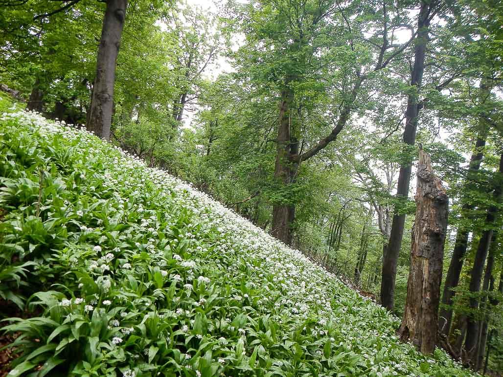 Jar na Vysokej v Malých Karpatoch