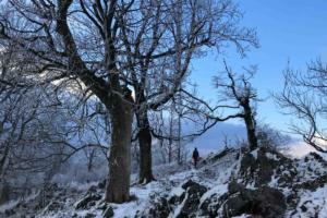 Vysoká, Malé Karpaty